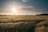 Serengeti (Alex Nichol) Tags: hay crop farm field sunrise landscape leicadg15mmf17asph olympuspenf microfourthirds m43 lee09ndhardgrad