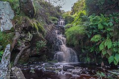 Bronte falls 1 (chromaphoto.co.uk) Tags: haworth westyorkshire yorkshire bronte wuthering heights waterfall bridge water creamy brown trees fern