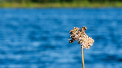 2016-08-24-001-MaMa - Augsburg - Wertach - 0339 - C00001sr - W1920 (mair_matthias_1969) Tags: bobingen bayern deutschland de lumix panasonic dmcg7 dmcg70 mft microfourthirds g7 g70 lumixg7 lumixg70 nophotoshop keineschmutzigentricks ohneschmutzigetricks nodirtytricks gvario14140f3556 outdoor pflanze plant landschaft landscape fluss river wertach stausee basin