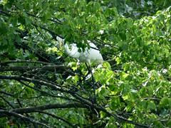 Bayard Cutting Fields Arboretum (75) (pensivelaw1) Tags: suffolkcounty newyorkstate longisland bayardcuttingarboretumstatepark