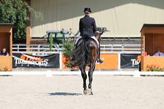 IMG_7618 (dreiwn) Tags: dressage dressur dressuur pferd reitturnier turnierreiten pferdesport horse horseback horseriding equestrian reitverein dressurprfung kandare doublebridle reiten pferde reitplatz ridingarena