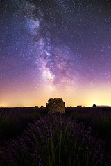 Lavender field under the milky way (Patrice Vallet) Tags: field sky landscape nature night stars astronomy ruins milky way milkyway lavender galaxy nightscape lavande constellation valensole provence flower france