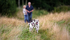 'Runaway Collies!' (Jonathan Casey) Tags: collie puppies puppy dog dogs running d810 nikon 200mm f2 vr