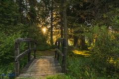Brcke (Peter Zitt) Tags: brcke bridge sonne sun wald forest landscape landschaft sonnenaufgang sunrise natur outdoor