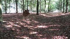 The mysterious leaf (Elisa1880) Tags: mysterious leaf geheimzinnige blad landgoed zuylestein leersum amerongen bos woods