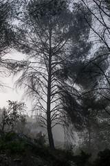 IMGP3139 (jamin.sandler) Tags: pentaxistds promasterspectrum728210mmf4265 einkerem fog