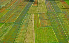 Colori e le geometrie dei campi coltivati (Bruno Tardioli) Tags: geometries abstract landscape castellucciodinorcia2016 umbria italia fioritura flowering nikon28105 nikond200
