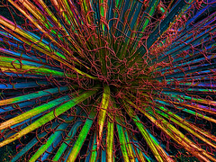 Spaghetti (bethrosengard) Tags: bethrosengard photomanipulation digitallyenhanced photoart digitalmagic digitalart