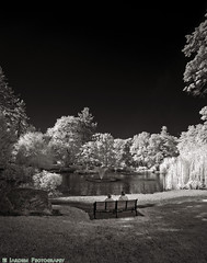 Afternoon At The Park (mjardeen) Tags: rokinon14mm28fe rokinon 14mm 28 fe ultrawide tacoma wa washington sony a7ii a7m2 wrightpark afternoon bench relax sitting fountain trees ir infrared black white blackandwhite bw 720nm converted s landscapesshotinportraitformat landscape