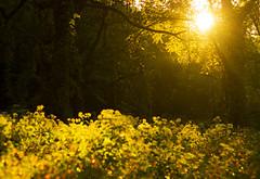 2014 (Matt Champlin) Tags: countingcrows dreams memories sun sunlight shadows sunset home canon 2014 thepast change green lush focal