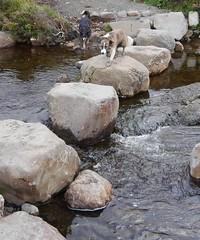 Glen Brittle Isle of Skye (carolinewright32) Tags: stepping stones isleofskye dog water stream