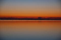 troppo silenzio (Antonio_Trogu) Tags: blue sunset red sea italy panorama reflection water night landscape italia tramonto mare horizon lagoon laguna acqua rosso azzurro riflesso orizzonte veneto deltadelpo scardovari polesine antoniotrogu pwpartlycloudy