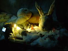 Joseph, kosaka and fire (Valeria Dalmon) Tags: sculpture white snow blanco animals fire rojo hare nieve animales fuego ilustration sculptor objets liebres handmadetextil artevaleriadalmon smallkosaka
