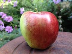 header apples