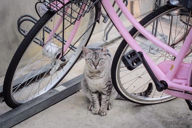 Today's Cat@2012-09-13
