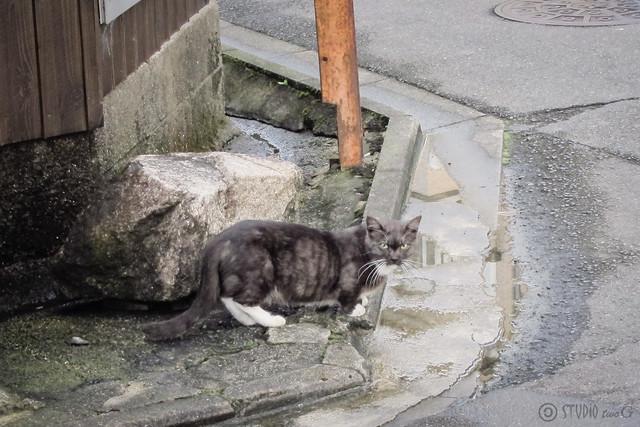 Today's Cat@2012-09-15
