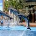 Apresentacao dos golfinhos