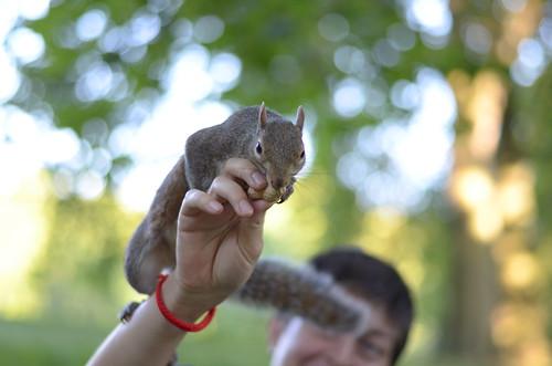Greedy squirrel ©  Still ePsiLoN