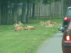 """Longleat Safari Park • <a style=""""font-size:0.8em;"""" href=""""http://www.flickr.com/photos/81195048@N05/8017661153/"""" target=""""_blank"""">View on Flickr</a>"""