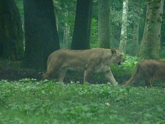"""Longleat Safari Park • <a style=""""font-size:0.8em;"""" href=""""http://www.flickr.com/photos/81195048@N05/8017664018/"""" target=""""_blank"""">View on Flickr</a>"""