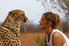 Face Off! (Mangini Adalberto & Laura) Tags: africa laura animals wildlife explore cheetah zambia bestportraitsaoi elitegalleryaoi mukunibig5