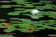 ::: Serenity ::: (Mohammed Al-Khars) Tags: flowers sea plants paris france green water forest river europe serenity kuwait pureness  fairness  lucidity     fineness                               purityclarity
