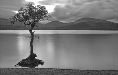 Millarochy Bay tree (b+w) (davidmccrone) Tags: longexposure mountains tree water canon landscape scotland twilight dusk country loch trossachs lochlomond balmaha millarochy