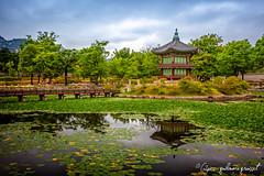 Korean Palace - Seoul (G2pics) Tags: reflection canon palace korea reflet seoul palais 5d nénuphar markii corée g2pics guillaumegrousset