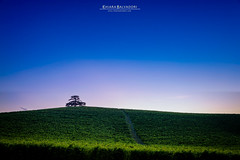 Lone Cedar (Chiara Salvadori) Tags: bluehour cedartree corderodimontezemolo travelphotography italy langhe piedmont barolo colors countryside farmland hill landscape lebanon meadow monfalletto nature outdoors premiun scenery sundown sunset travel tree vineyard