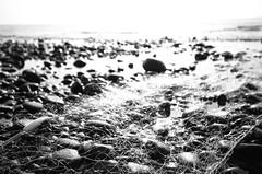 (moonowl7397) Tags: nikon fm3a rdp3 film analog ps 201607 sea fisher