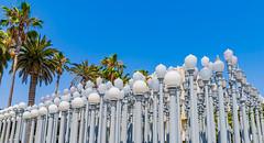Palms and Lamp Posts (Christobol) Tags: streetlights sun blue lights palmtrees fenceline noperson artitecture bluesky losangeles outdoors postlamps california lamps hanging afternoonsun