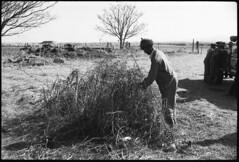 Grave of A.J. deJager, Hillside, Ladysmith (neville.constantine) Tags: boerwar angloboerwar boer burgher burghermonument platrand ladysmith siegeofladysmith shrapnel balloon exhumation wargraves natal southafrica