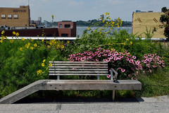 A Bench and a River (Eddie C3) Tags: newyorkcity nycparks friendsofthehighline nyc highline meatpackingdistrict highlinepeelupbench bench benches highlinepark hudsonriver newjersey