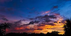 palette of sunset (jdrephotography) Tags: sunset florida sky skyscape blue orange usa silhouette trees palmtrees panorama stitchedpanorama