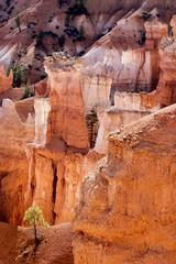 Playing Peek-A-Boo II (dbpeterson723) Tags: bryce brycecanyon rockformations trees beautifullight animatednature geology utah natlparks