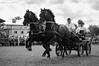 Run for the victory (Kajmakowa) Tags: horse horses animals equine equines nikon nikkor d300s friesian friesians