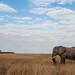 Bull Ellie Landscape