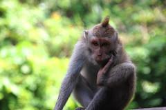 IMG_0446 (Marta Montull) Tags: holidays indonesia canon gopro malaysia kuala lumpur bali gili islands rice terraces temples monkey travel photography landscape