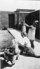 Cats' food didn't come out of a can and it was nothing but the best fish - Pt Perpendicular, c1936, Mrs Tulk (State Library of New South Wales collection) Tags: statelibraryofnewsouthwales