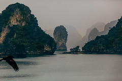 Ha Long Bay (Adam.Hindmarch) Tags: vietnam ha long bay tu bird nature travel film green sea ocean fog hindmarch photography canon atmosphere morning golden hour