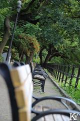 Hibiya park 3, seats (ZKent.Yousif) Tags: chiyodaku tkyto japan jp  chku  minatoku canon sigma sigma1750mm 50mm streetphotography street park parks seats bench bw blackandwhite