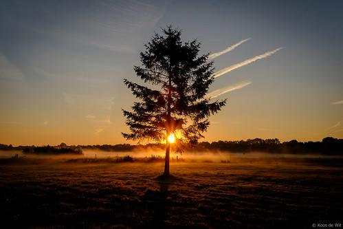 Misty sunrise in Harkstede