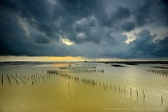Z shape oyster farm (anthonyko) Tags: sunset taiwan oyster tainan    wetland qigu chiku  z