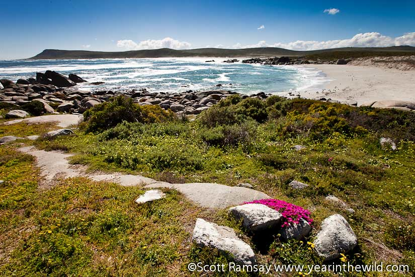 West Coast National Park - South Africa