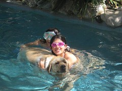 7915369822 114295ee7e m Hercules, Photos of my fun Yellow Labrador