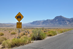Tortoise Crossing (roevin | Urban Capture) Tags: redrockcanyon road park usa mountain nature grass tarmac sign rock warning driving crossing desert lasvegas nevada tortoise dry canyon national caution xing