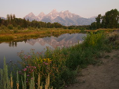 Schwabachers Landing-Grand Teton National Park-Wyoming (mikemellinger) Tags: morning trees usa mountain snow mountains west reflection nature water beauty america forest landscape rockies dawn nationalpark scenery stream rocky landing wyoming grandtetons peaks tetons range grandtetonnationalpark schwabachers