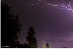 Lightening Bolts (Andrew Kellaway) Tags: trees light storm rain clouds canon photography andrew bolts lightning flares kellaway 1100d