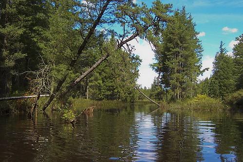 Batsto River beauty