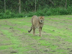 """Longleat Safari Park • <a style=""""font-size:0.8em;"""" href=""""http://www.flickr.com/photos/81195048@N05/8017599401/"""" target=""""_blank"""">View on Flickr</a>"""